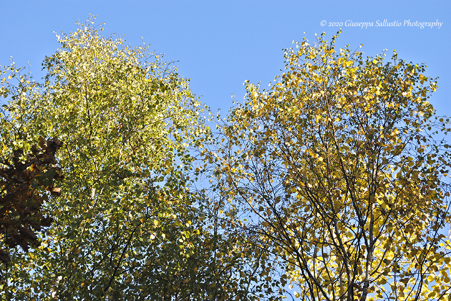 Låt oss fira hösten