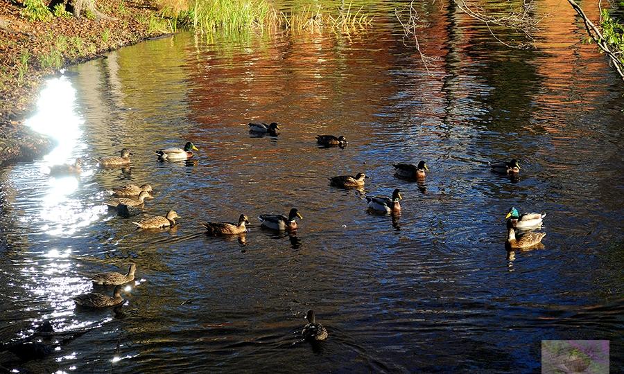 Mesmerising in the water
