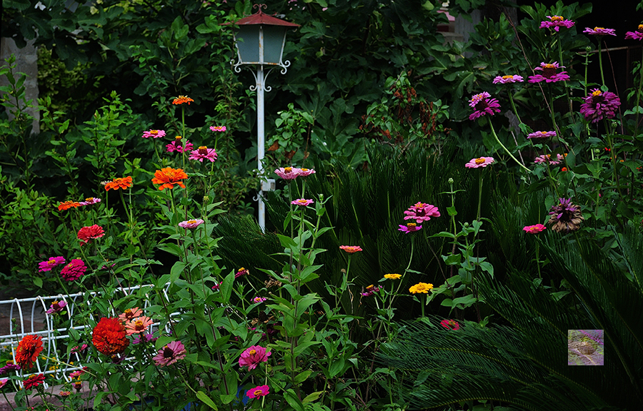 From the Project: In the Kitchen Garden – Flowers, Vegetables and Quotes